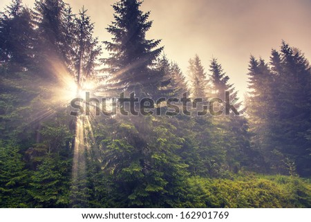 Sunlight in the green forest early morning. Carpathian, Ukraine, Europe. Beauty world. - stock photo