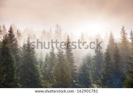 Sunlight in the green forest early morning. Carpathian, Ukraine, Europe. Beauty world. - stock photo