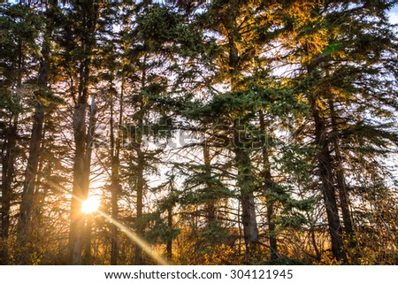 Sunlight in the green forest, nature series - stock photo