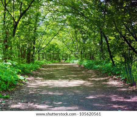 Sunlight in the green forest. Summer - stock photo
