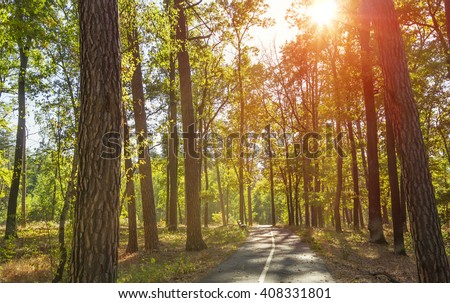 Sunlight in the green forest, summer time. - stock photo