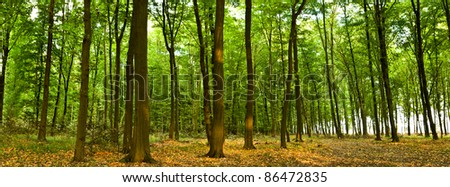 Sunlight in the green forest, summer time - stock photo