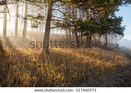 Sunlight in the morning, foggy forest. Autumn Landscape - stock photo