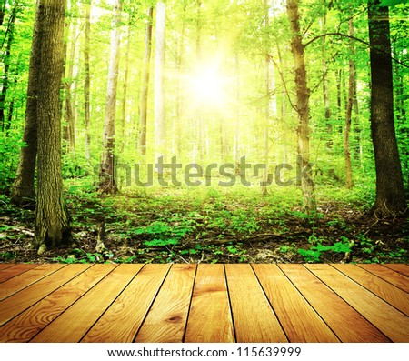 Sunlight in thesummer forest with wood planks floor