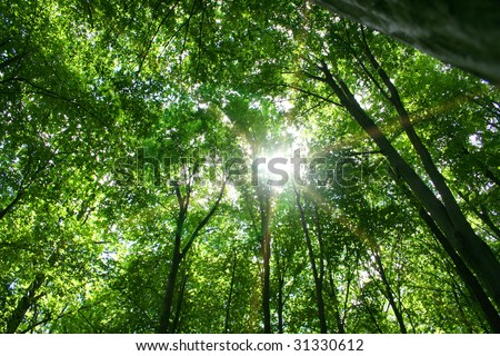 sunlight in trees of green summer forest