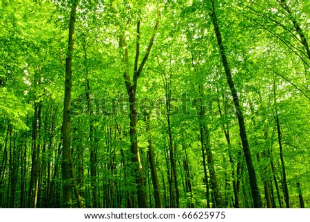 sunlight in trees of green summer forest - stock photo