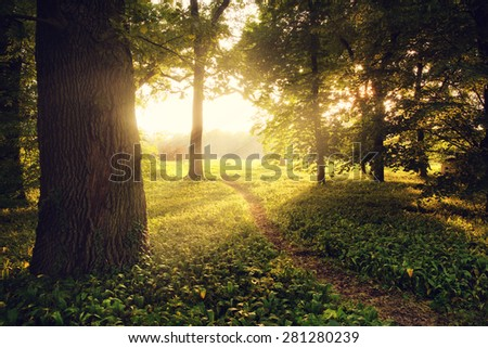Sunlight on green forest