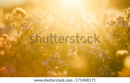 Sunlight on the field,flowers in the sunshine - stock photo