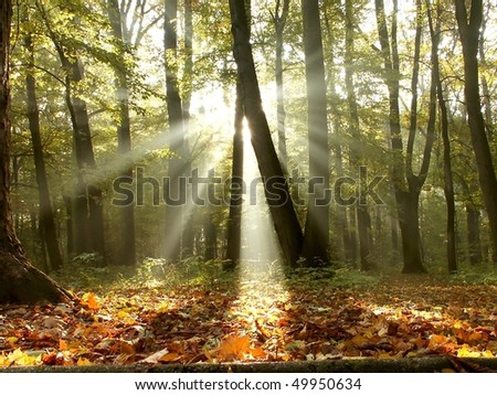 Sunlight passes through the trees in the misty forest in the autumn morning. - stock photo