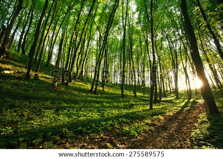 Sunlight rays in green forest - stock photo