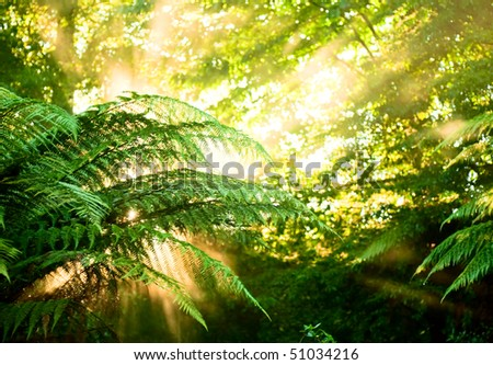 Sunlight rays pour through fern leaves in a rainforest at New Zealand - stock photo