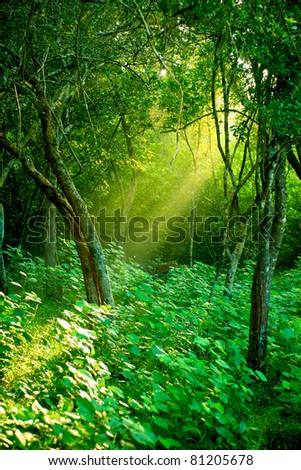 Sunlight rays pour through leaves in a rainforest at Sri Lanka - stock photo