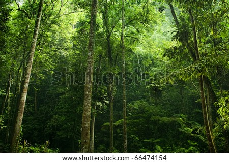 Sunlight shine thru the green forest - stock photo
