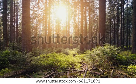 Sunlight shines in the green forest