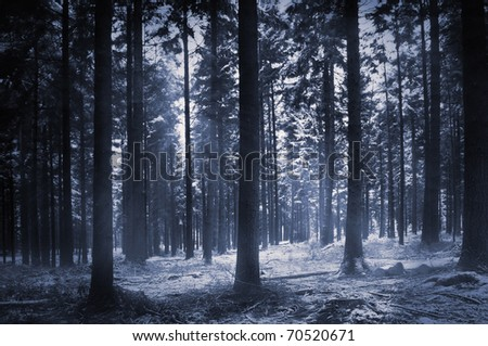 Sunlight shines through trees in a wood on a winters morning - stock photo