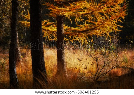 Sunlight shining in an open spot in a dark forest during a sunny autumn day