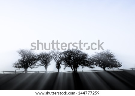 Sunlight streaming through five fog enshrouded trees on an early autumn morning in Stowe, Vermont, USA - stock photo