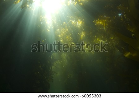 sunlight streaming through underwater kelp forest at casino point, catalina island, california - stock photo