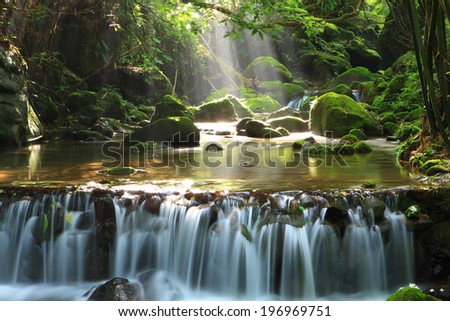 Sunlight streams through the treetops into a stream with a waterfall. - stock photo