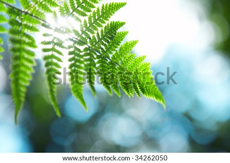 Sunlight through a branch of a fern against green vegetation