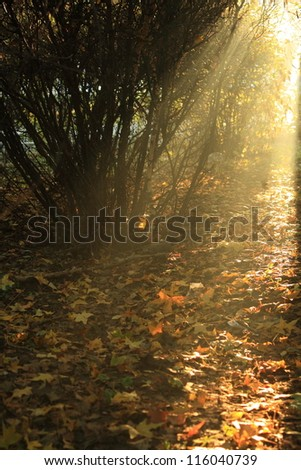 Sunlight through bush