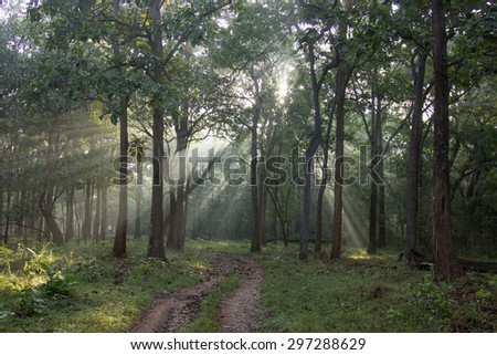 sunlight through forest - stock photo