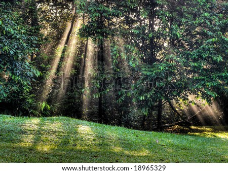 Sunlight through forest clearing