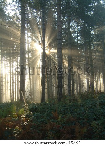 Sunlight through misty forest