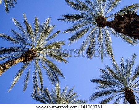 Sunlight through the palm fronds - stock photo