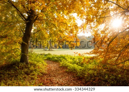 Sunlight through the trees in a forest during Autumn. - stock photo