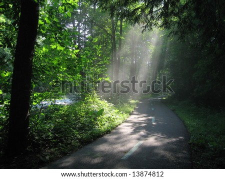 Sunlight through Woods - stock photo
