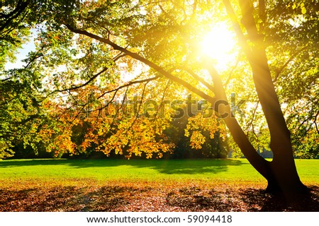 Sunlighted yellow autumn tree in a park - stock photo