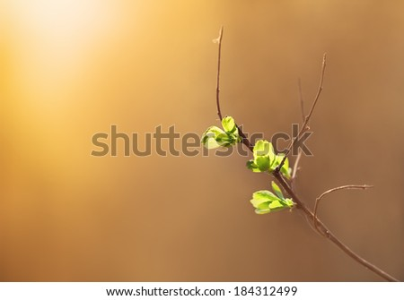 Sunlit blossoming tree branch in March - stock photo