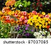 Sunlit street flowers for sale - stock photo