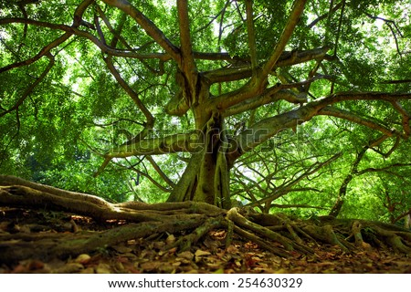 Sunlit trees in the Royal Botanic Gardens, near Kandy, Sri Lanka - stock photo