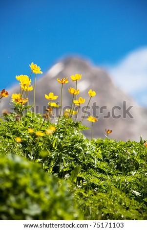 Sunny alpine meadow - stock photo
