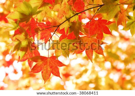 Sunny Autumn Leaves - stock photo
