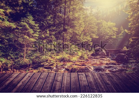 Sunny autumn morning in a colorful forest and brook. - stock photo