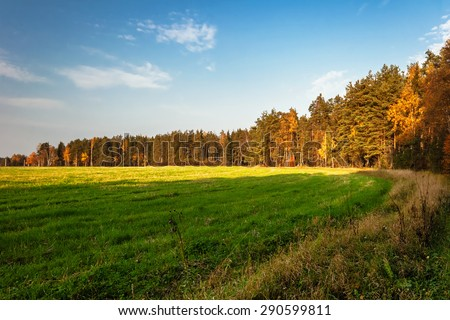 Sunny autumnal field under blue sky  - stock photo