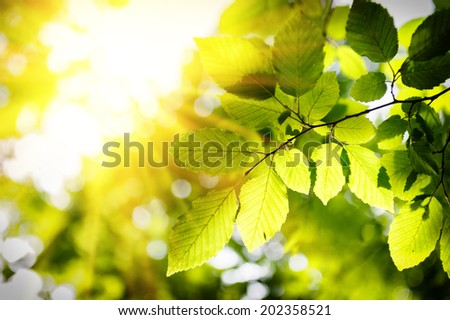 Sunny background with green leaves - stock photo