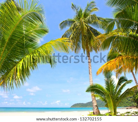 Sunny beach with palm trees