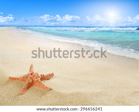 Sunny beach with starfish - stock photo
