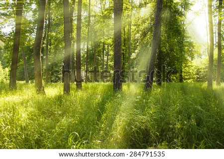 Sunny beams in forest - stock photo