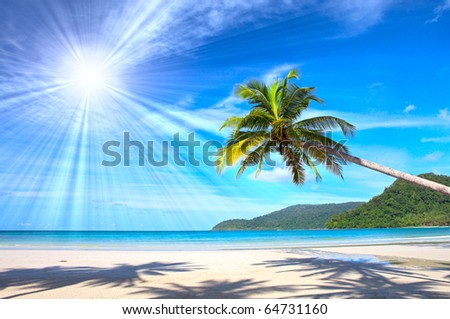 Sunny beautiful tropical beach with palms - stock photo