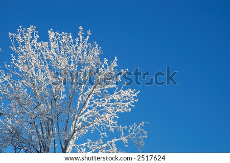Sunny branches covered with fresh snow - stock photo