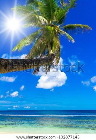 Sunny Coast Palm View - stock photo
