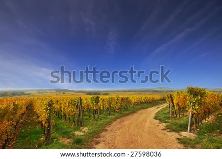 Sunny Country Road in French Vineyard - stock photo