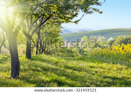 Sunny Countryside landscape at the morning - Flowering trees, green grass and beautiful valley panorama, spring - stock photo