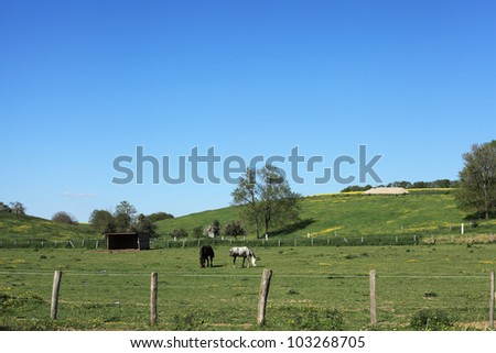 sunny countryside landscape with horses in the spring