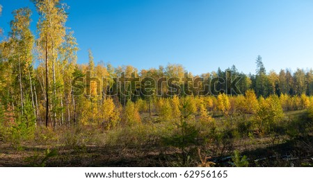 Sunny day at autumn forest - stock photo